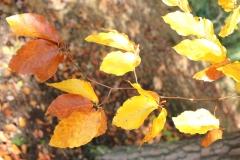 """Plener \""""Jesień w obiektywie\"""""""