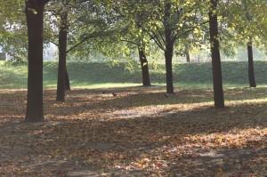 Jesienny spacer z aparatem.